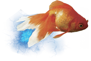 poisson3.png