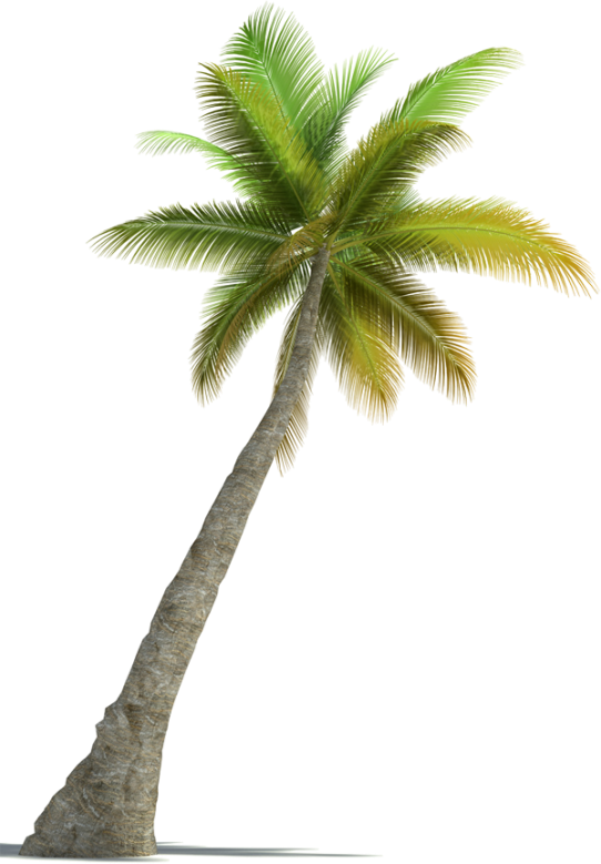 cocotier-png-3.png