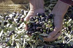 home-olive.jpg