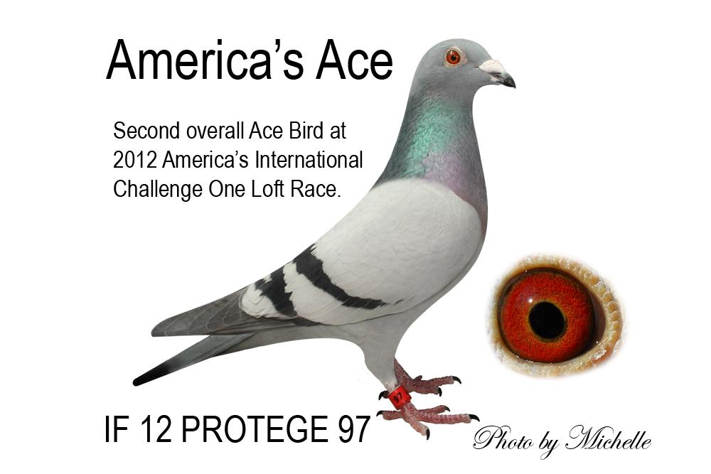 AMERICA'S ACE