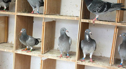Birds in the Quarantine section