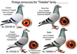 TINKELBELL FAMILY