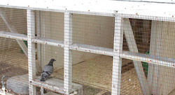 Big Andy's Quarantine Facility