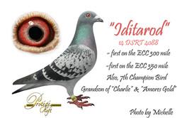 IDITAROD -14DSRT4088