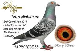 TIM'S NIGHTMARE