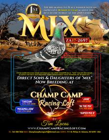 ChampCamp_GFX_DirectSonDtrMIX_e.jpg