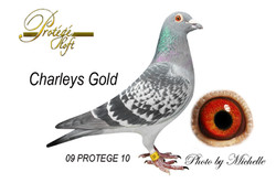 CHARLEY'S GOLD