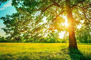 Arbol luz sol.jpeg