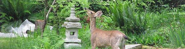 ENS-deer-3-1200-1200x320.jpg