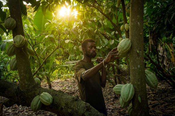 Grand Cru Cacao-Sambirano.jpg