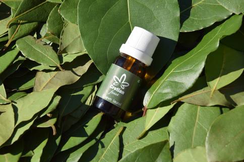 Lorbeer Duftöl, auf frischen Lorbeer Blätter
