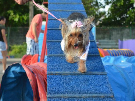 Evento voltado para animais de estimação será realizado neste fim de semana em Jaboatão