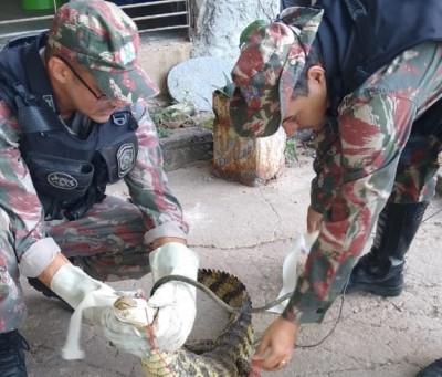 Jacaré é capturado no Conjunto Marcos Freire