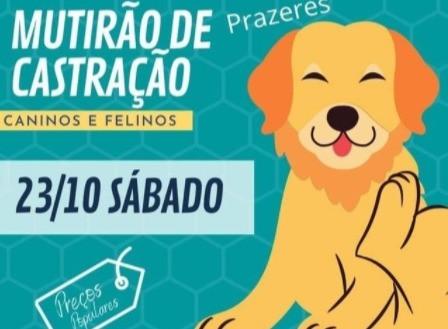 O Instituto realiza castração em Prazeres