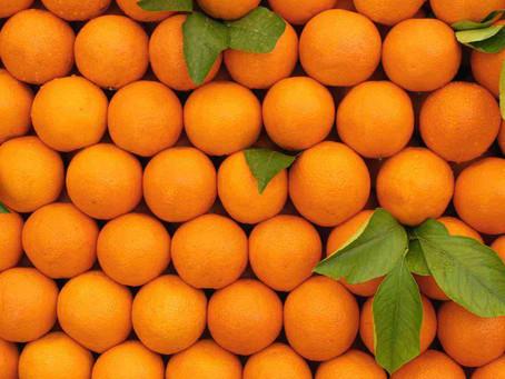 Jaboatão: Justiça intima partidos sobre supostas candidaturas laranjas