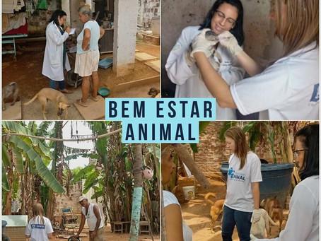 Programa Bem Estar Animal atua em diversos abrigos de cães e gatos