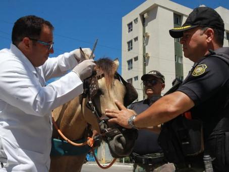 Operação combate maus tratos de animais em Candeias e Barra de Jangada