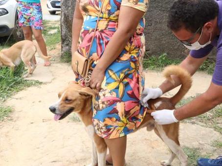 Jaboatão realiza mutirão de vacinação antirrábica em Santo Aleixo