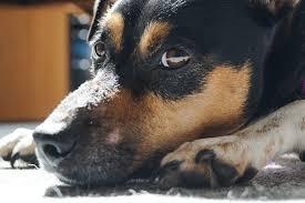 Maltratar ou abandonar animais vai pesar ainda mais no bolso