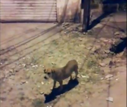 Mulher precisa de ajuda para cuidar de cães e gatos abandonados
