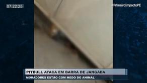 Mesmo preso, Pitbull mata cão durante ataque dentro de fábrica em Jaboatão