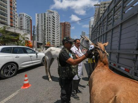 Sistema de identificação reduz número de animais soltos em ruas do Jaboatão