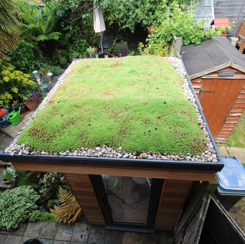 Sedum Living Roof