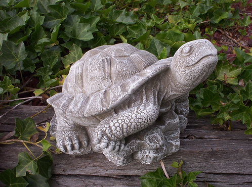 DETAILED TURTLE