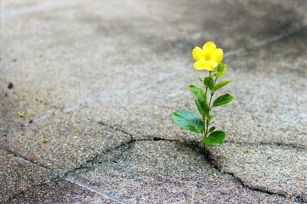 fleur-jaune-qui-pousse-rue-crack-concept