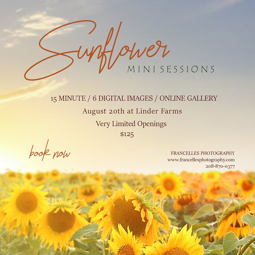 Sunflower Sessions Linder Farms