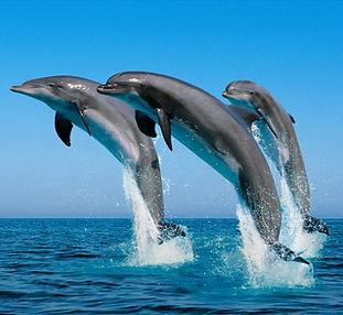 delfin mular.jpg