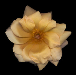 Flower 10 Black Series 2002