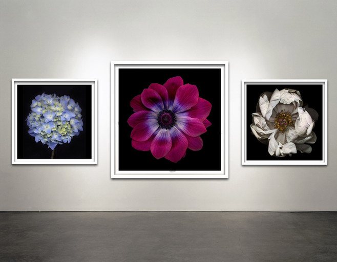 Botanical Frames Black Background