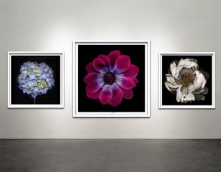 Botanical Frames Black Background