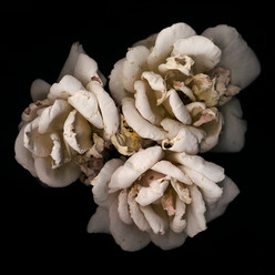 Flower 01 Black Series 2002