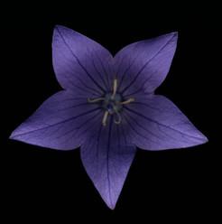 Flower 20 Black Series 2002