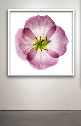 "Botanical Frame WT # 87 30x30"""