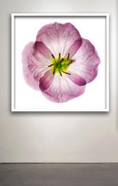 """Botanical 80 Framed 20x20"""""""