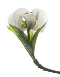 Flower 130 White Series 2009