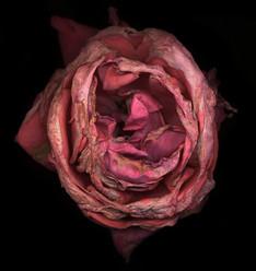 Flower 03 Black Series 2002