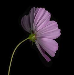 Flower 84 Black Series 2005
