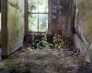 Chief Doctors, Private Home, Ellis Island, (Sprouts)1994
