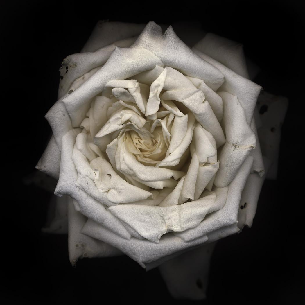 flower_09bl01
