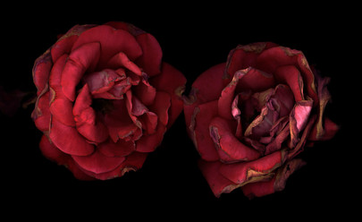 Flower 27 Black Series 2002