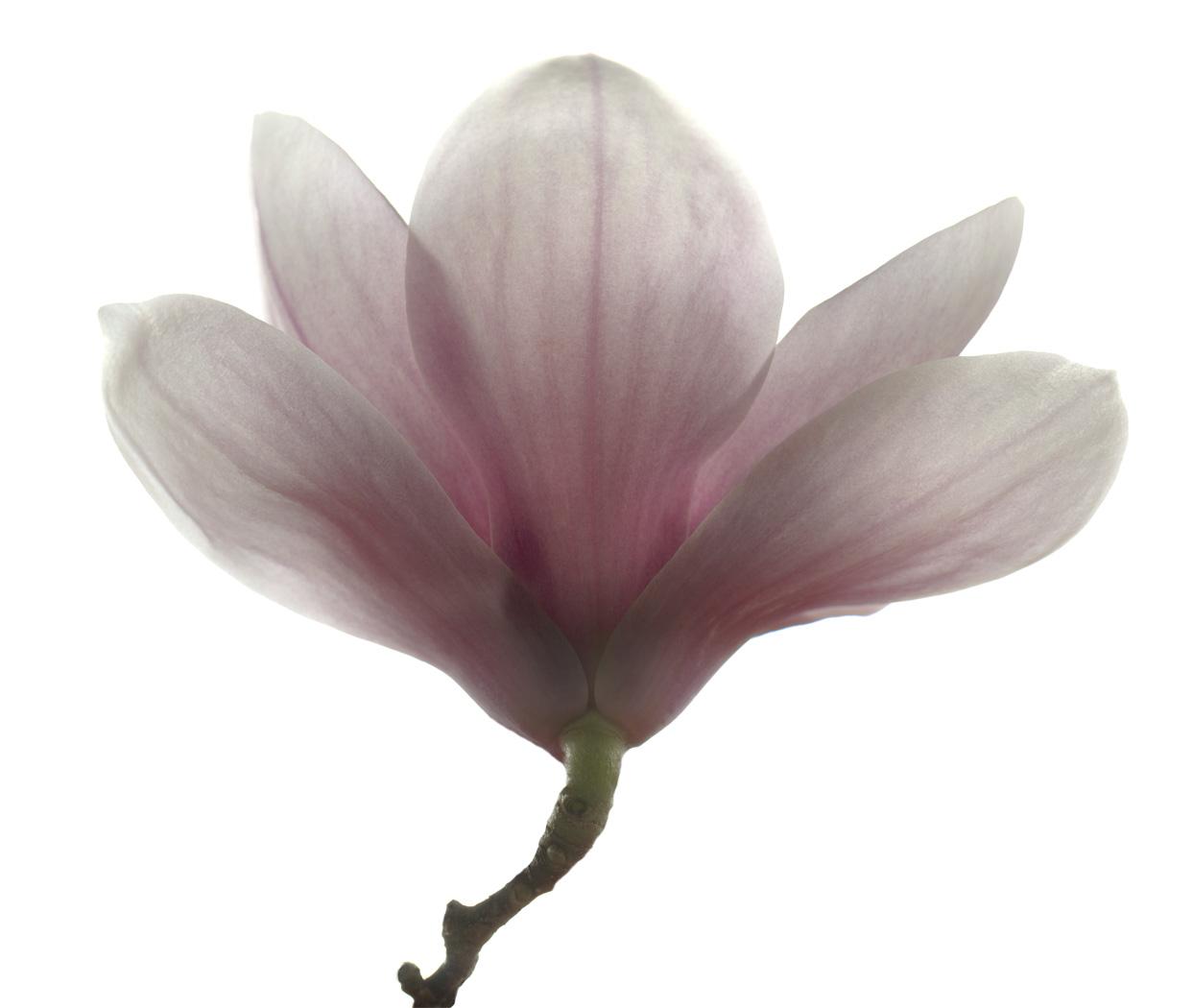 flower_126.wt08