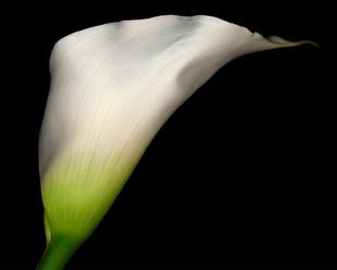 Flower 45 Black Series 2004