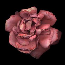 Flower 24 Black Series 2002