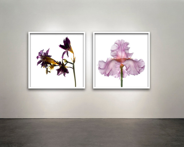 "Botanical Frames 30x30"""