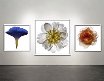 Botanical Flowers 58 , 23, 21 Framed White