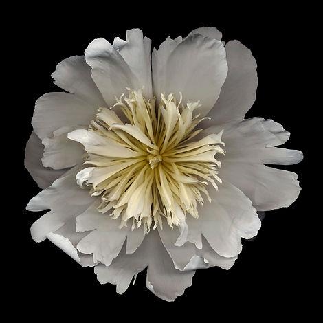 flower_18bl02.jpg